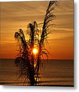 Sunrise Through The Palm Metal Print