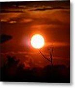 Sunset - Stuck On Tree Branch Metal Print