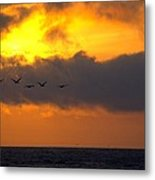 Sunset And Pelicans Metal Print