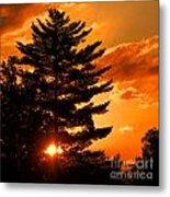 Sunset And Pine Tree  Metal Print