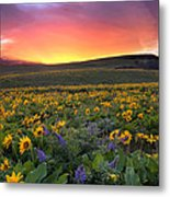Sunset At Columbia Hills State Park Metal Print