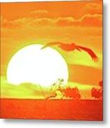 Sunset At Elizabeth Bay Metal Print