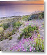 Sunset At The Beach  Flowers On The Sand Metal Print