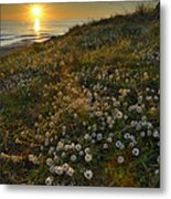 Sunset At The Beach  White Flowers On The Sand Metal Print by Guido Montanes Castillo