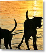 Sunset Dogs  Metal Print by Laura Fasulo