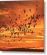 Sunset Flight Metal Print