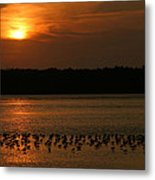 Sunset Flock Metal Print
