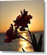 Sunset Flower 2 Metal Print