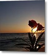 Sunset Flower 3 Metal Print