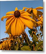 Sunset Flowers Metal Print
