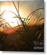 Sunset Grass 1 Metal Print