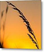 Sunset Grass Metal Print