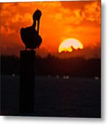 Sunset Pelican Metal Print
