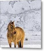 Sunset Horse In Montana Metal Print