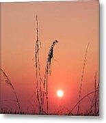 Sunset In Tall Grass Metal Print