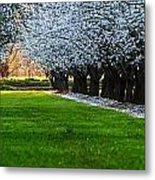 Sunset In The Almond Orchard Metal Print