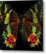 Sunset Moth Metal Print