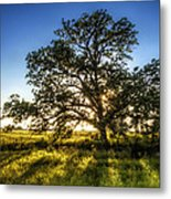Sunset Oak Metal Print