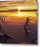 Sunset On Caribou Antlers In Whitefish Lake Metal Print