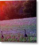 Sunset On Mallards Metal Print