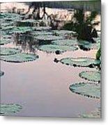 Sunset On Pond Lily Pads Metal Print