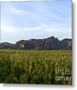 Sunset On The Golf Course Metal Print