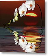 Sunset Orchids Metal Print