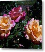 Sunset Painted In Roses Metal Print
