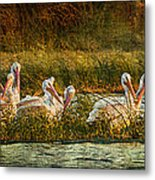 Pelicans Rest Metal Print