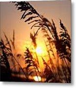 Sunset Seaoats Metal Print