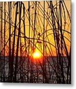 Sunset Through Grasses Metal Print