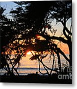 Sunset Through The Cypress Trees Cambria Metal Print