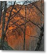 Sunset Through The Forest Metal Print