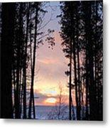 Sunset Through The Pines Metal Print