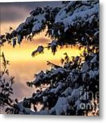 Sunset Through The Snowy Branches Metal Print