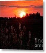 Sunset Wheat Field Metal Print