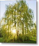 Sunset Willow Metal Print