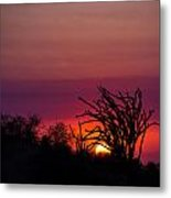 Sunset With Octopus Tree Metal Print