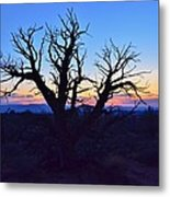 Sunset With Tree Silhouette Metal Print