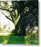 Sunshine And Sunbeams Metal Print