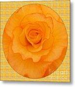 Sunshine Begonia Metal Print