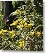 Sunshine Flower 3 Metal Print