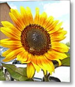 Sunshine In Country Farm Metal Print