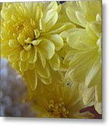 flower - Sunshine in Petals Metal Print