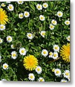 Sunshine In The Daisies Metal Print