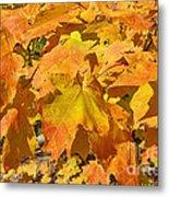 Sunshine Of Fall Metal Print