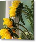 Sunshine On My Face Metal Print by Paula Rountree Bischoff