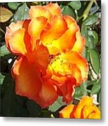 Sunshine On Rose Metal Print by Rosalie Klidies