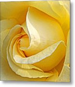 Sunshine Rose Metal Print