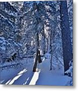 Sunshine Through Winter Trees Metal Print